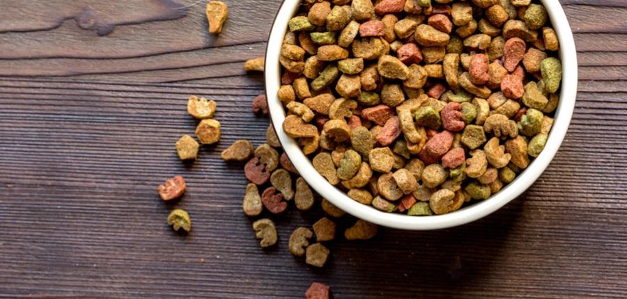 dry cat food in bowl